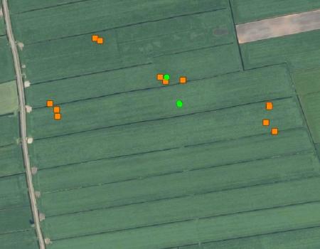 weidevogel nesten locatie gps drone aeret dronexpert thermische camera warmtebeeld